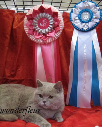 Supreme Champion Ultra Beauty  Wonderfleur*Ru DVM. Owner Strokan Anna  +7(495) 422-34-36, +7-916-215-91-66
